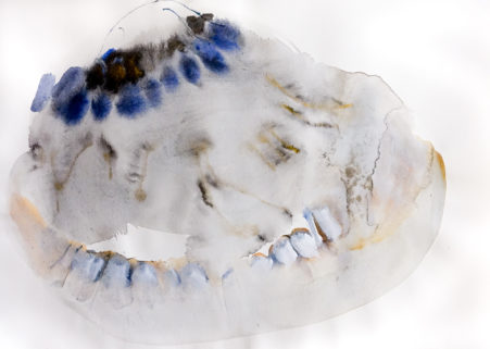Muschel / shell