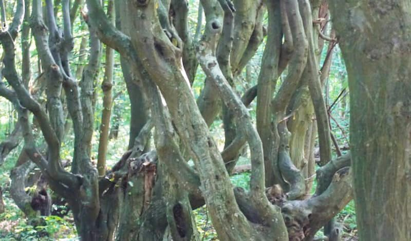Die Bäume